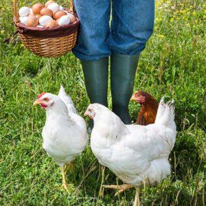 huevos-camperos